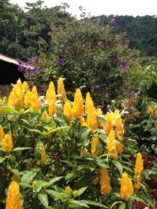 Flowers at Bella Aurora