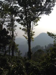 View from Vista Bella