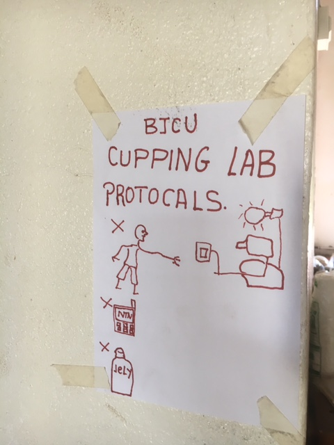 Cupping Lab Protocols