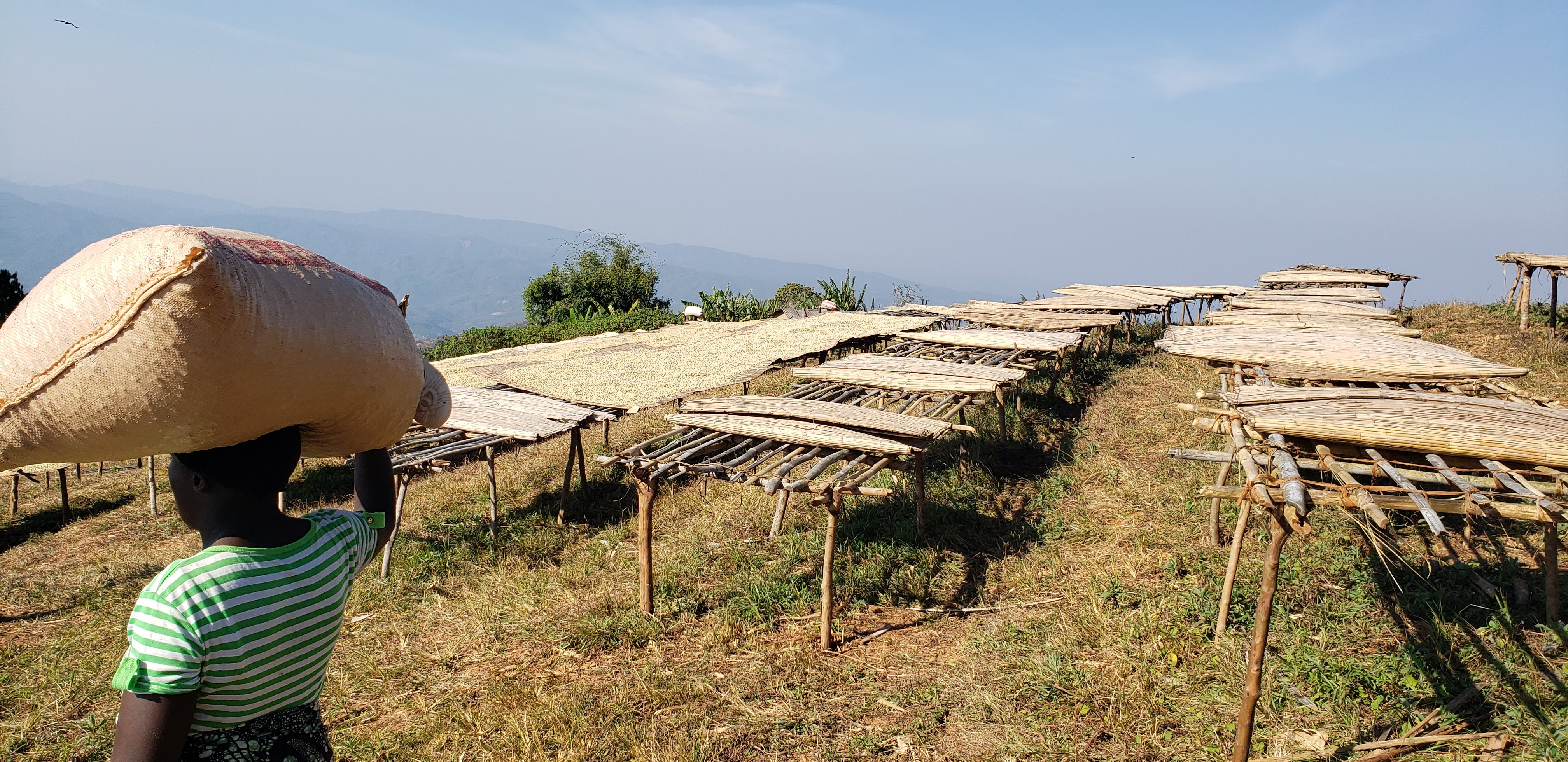 Chinongo CPUs raised beds sit at 1,600 MASL
